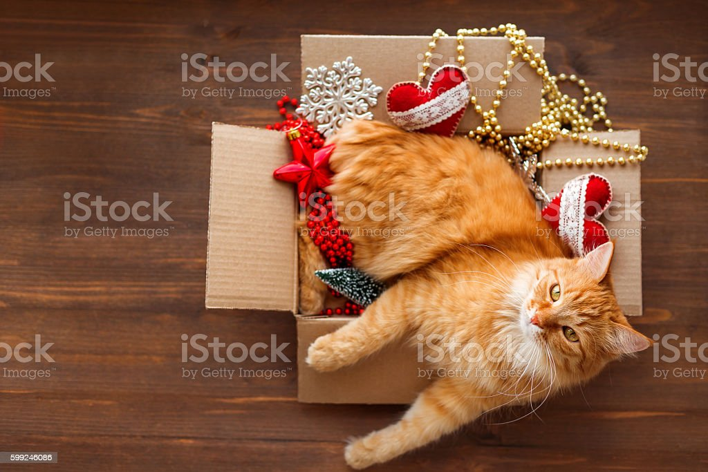 Ginger cat in box with Christmas and New Year decorations stock photo