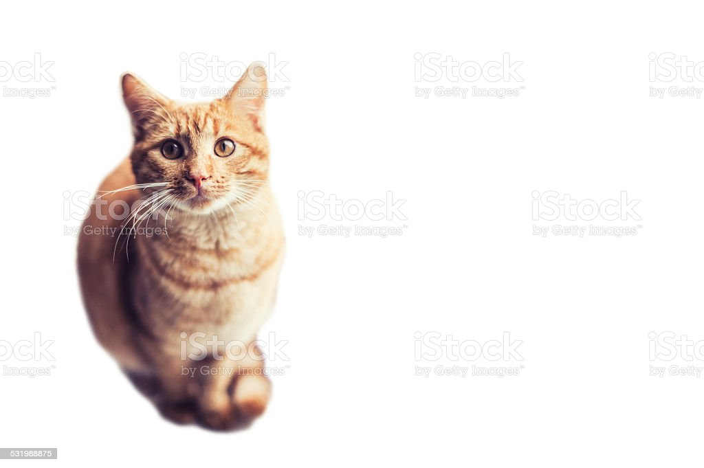 Ginger cat looking up stock photo