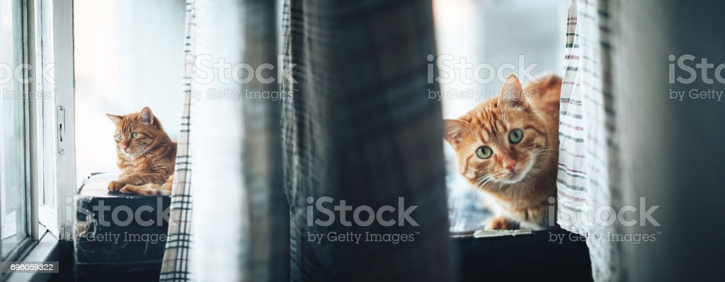 Ginger Cat on the Box on the Balcony stock photo