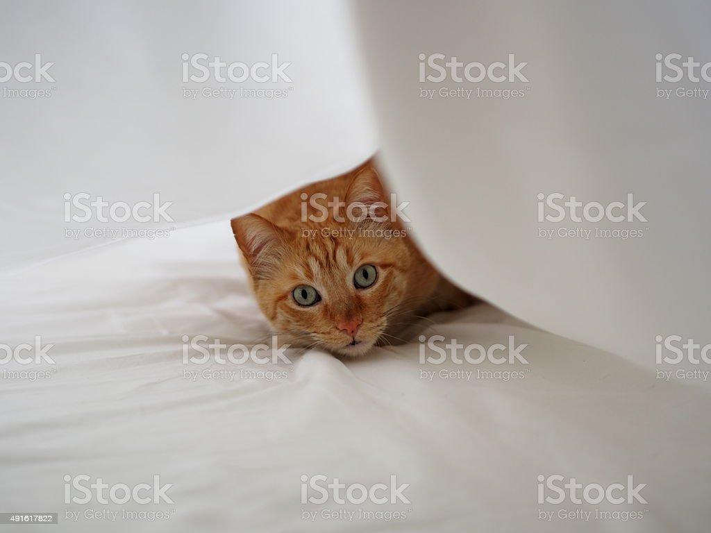 Рыжая кошка Стоковые фото Стоковая фотография