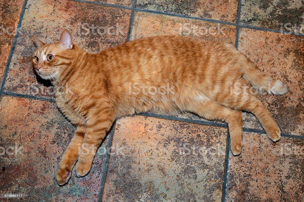 Ginger Cat Portrait stock photo