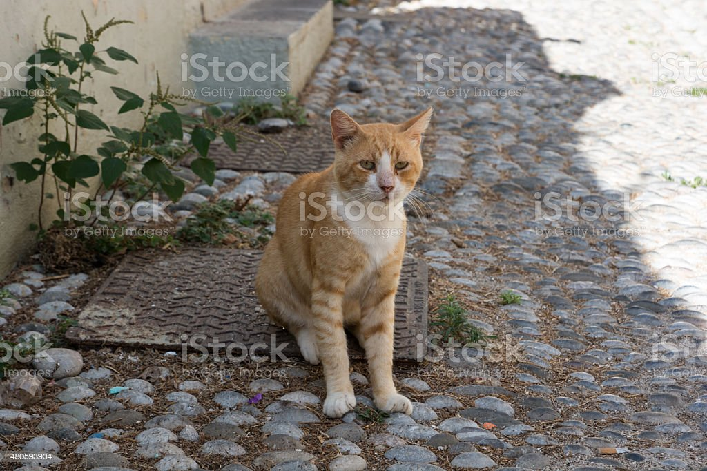 Ginger cat sitting on a street stock photo