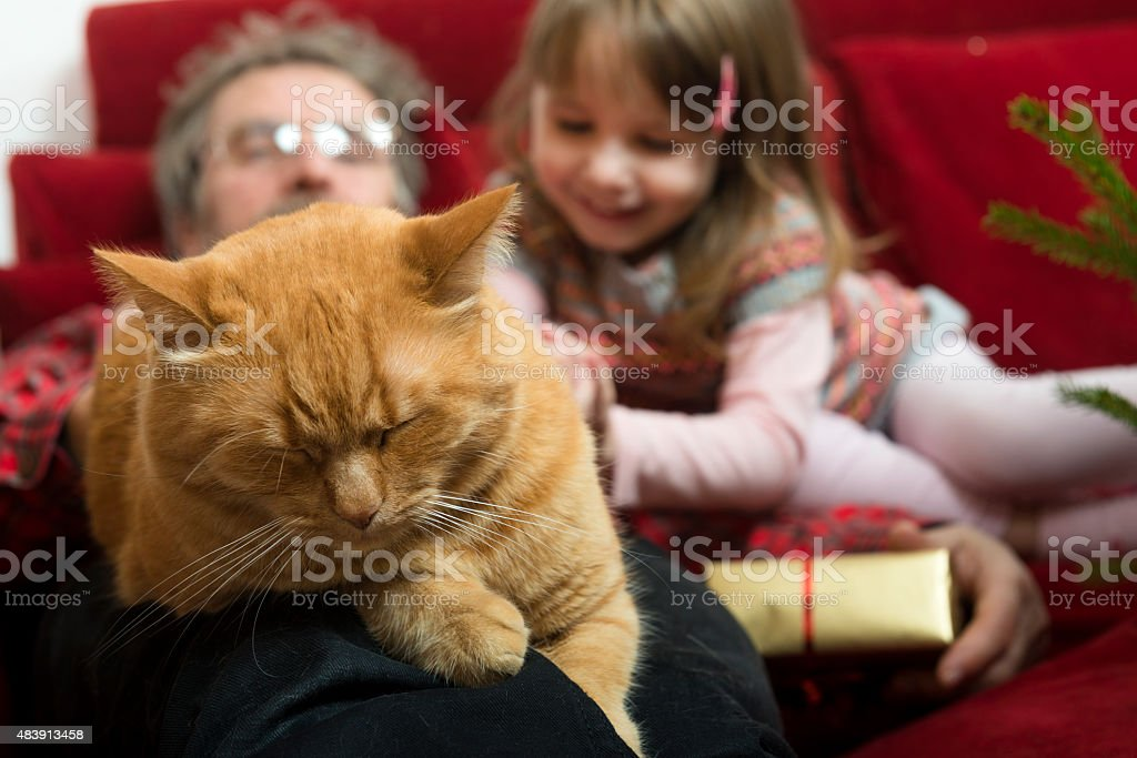 Ginger Cat Sleeping, Grandfather and Granddaughter on Red Sofa, Europe stock photo