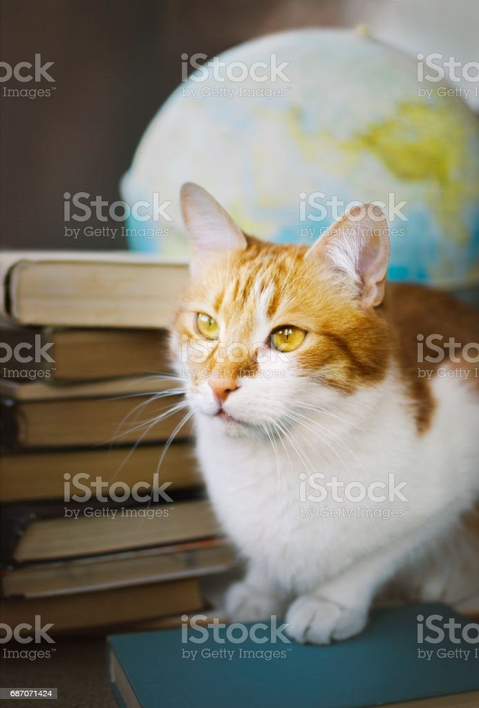 Ginger cat with old books and globe, librarian learned cat, studying...