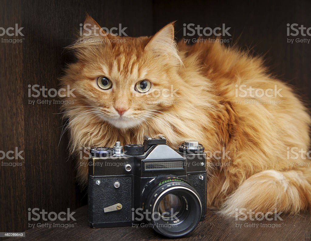 Ginger cat with vintage camera stock photo