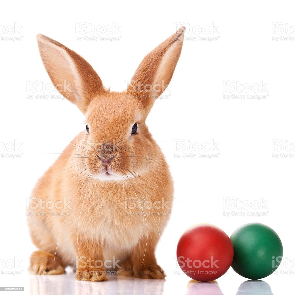 Ginger Easter bunny with two colorful balls on the side stock photo