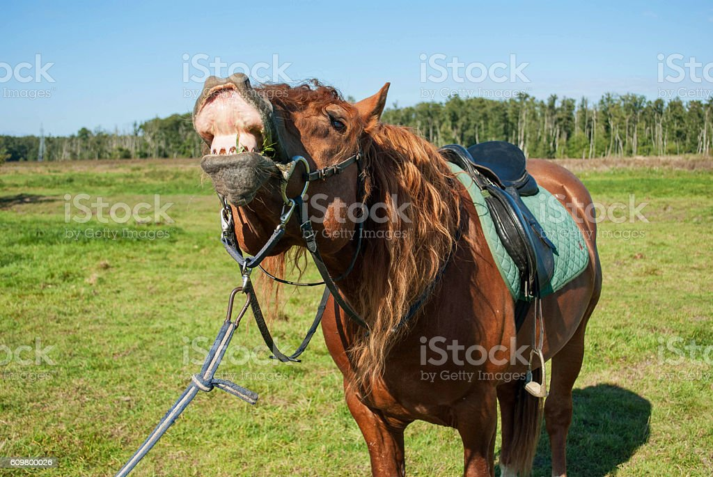 ginger horse sniffing stock photo