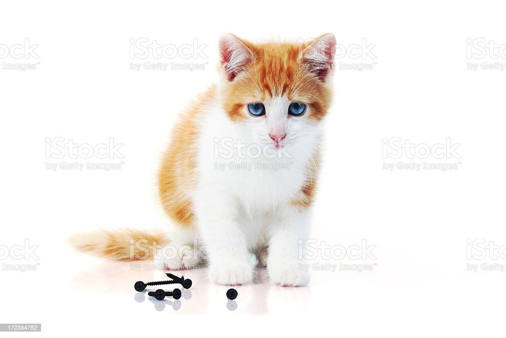 Ginger kitten stock photo