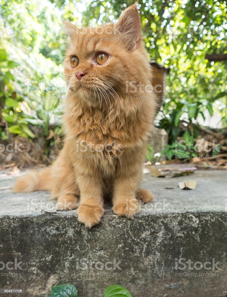 Ginger Mixed Breed Cat Sitting on cement sheets stock photo
