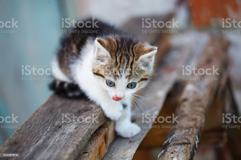 ginger small kitten playing in the street stock photo