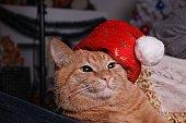 Ginger tabby cat in a Santa Claus cap