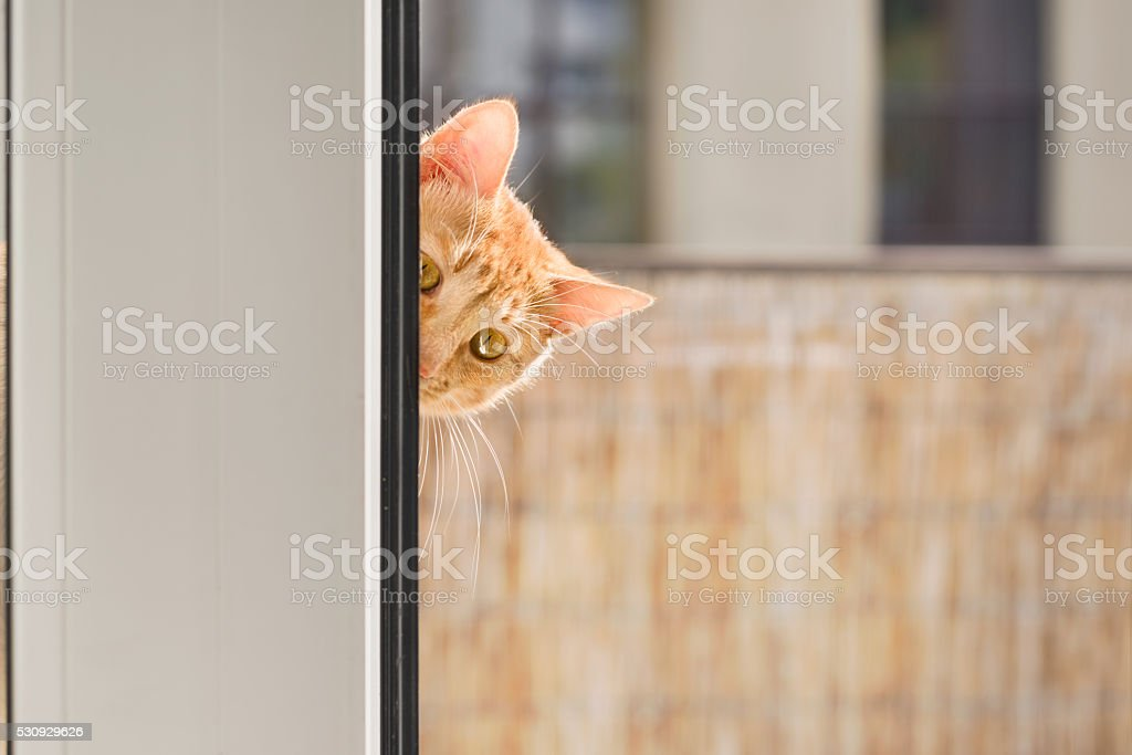 Ginger tabby cat looking in through the window stock photo