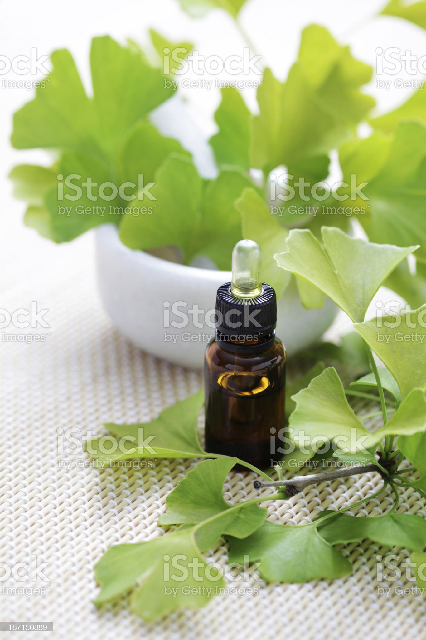 Ginkgo biloba essential oil royalty-free stock photo