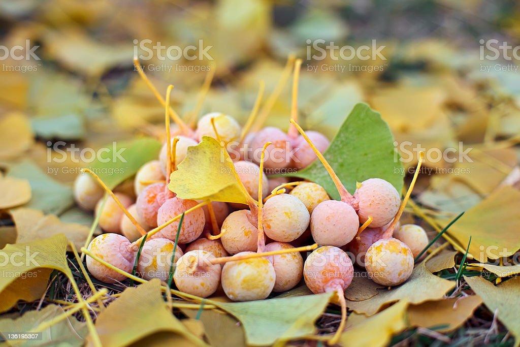Ginkgo Biloba fruits heap lying over leaves, outdoor shot stock photo