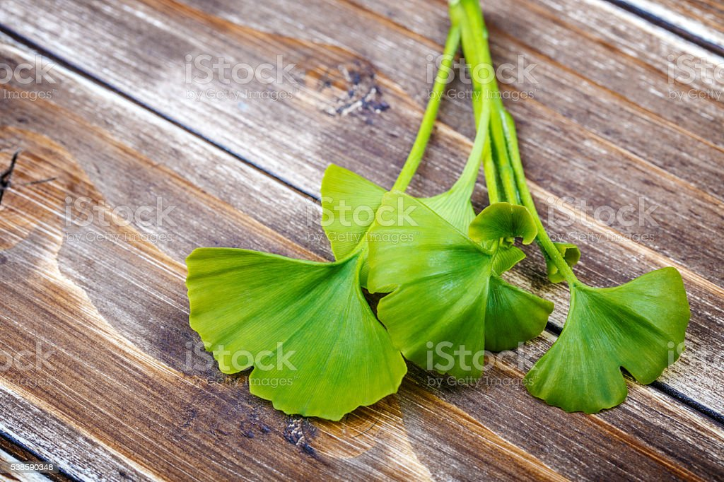 Ginkgo biloba on a wooden stock photo