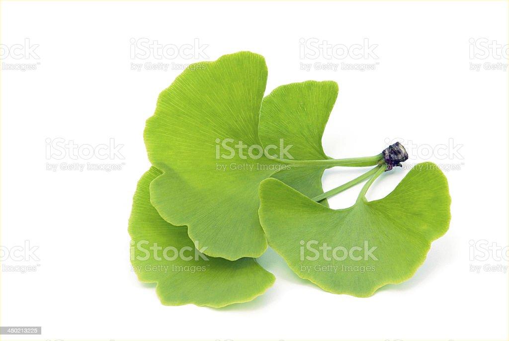 ginkgo leaf isolated stock photo