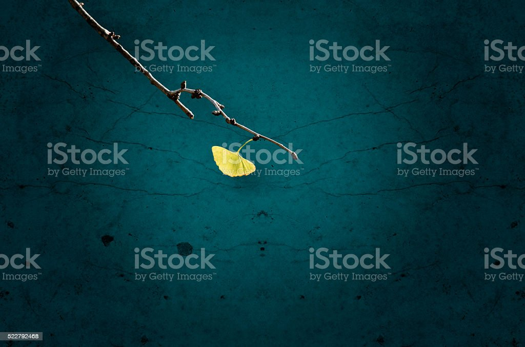 Ginkgo leaf on branch stock photo