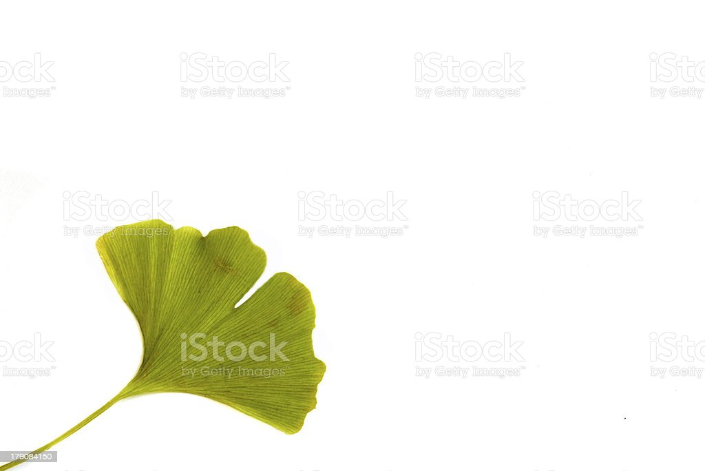 ginkgoes bilobate - isolate leaf stock photo