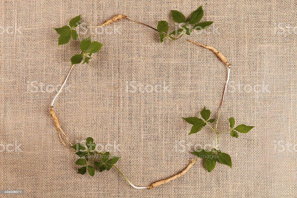 ginseng frame stock photo