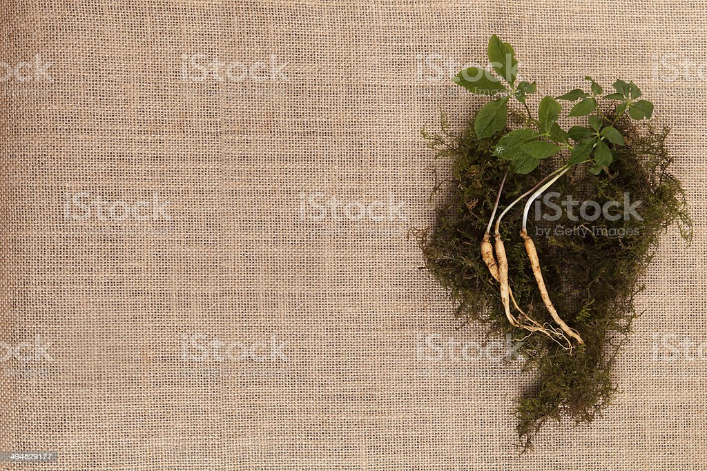 ginseng nature stock photo