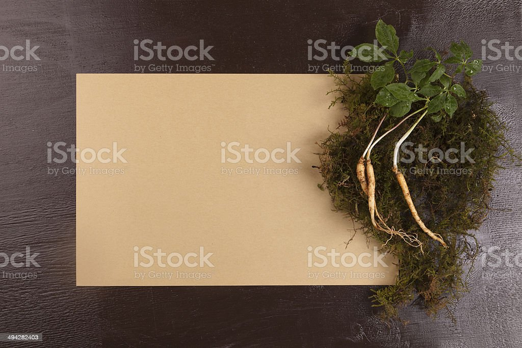 ginseng paprer stock photo