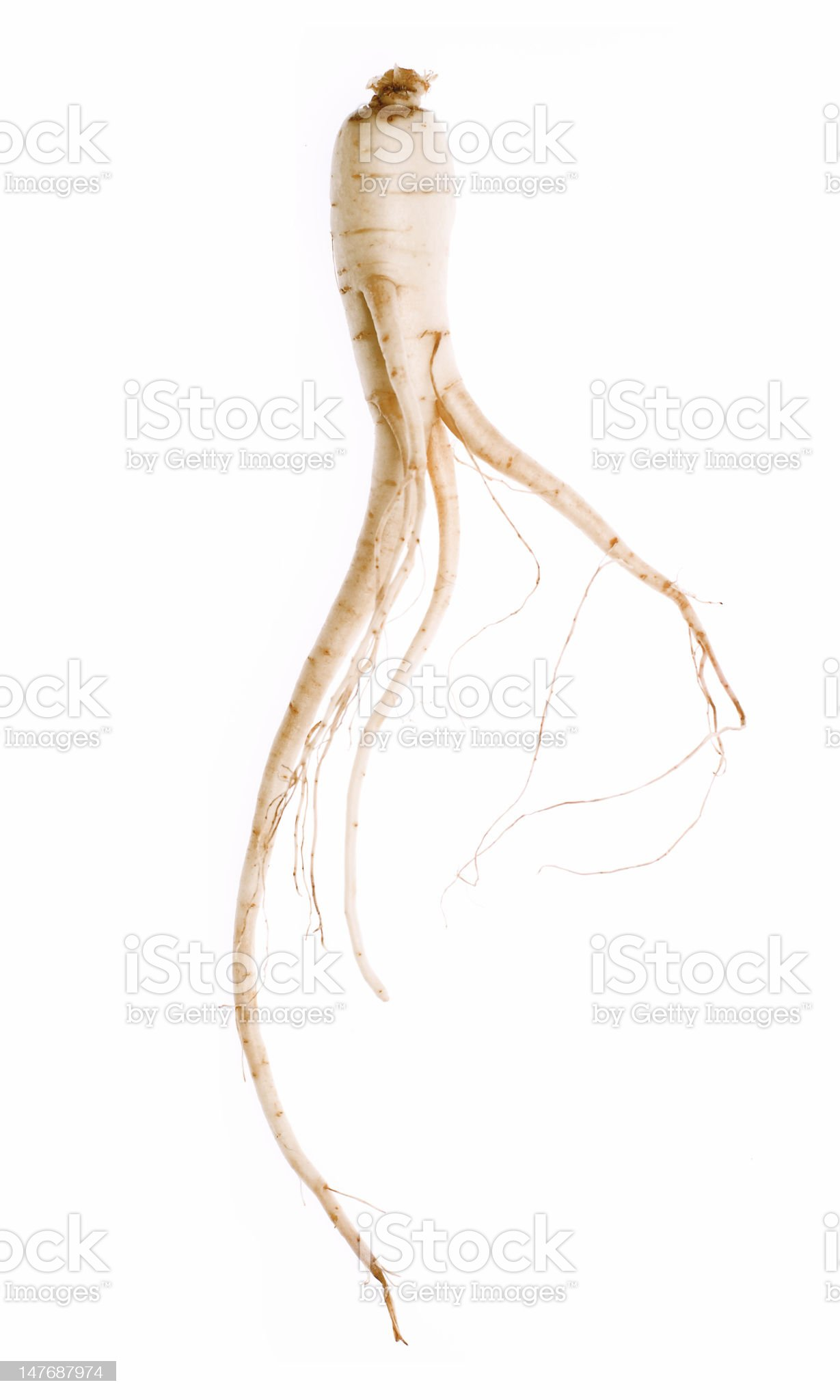 Ginseng root royalty-free stock photo