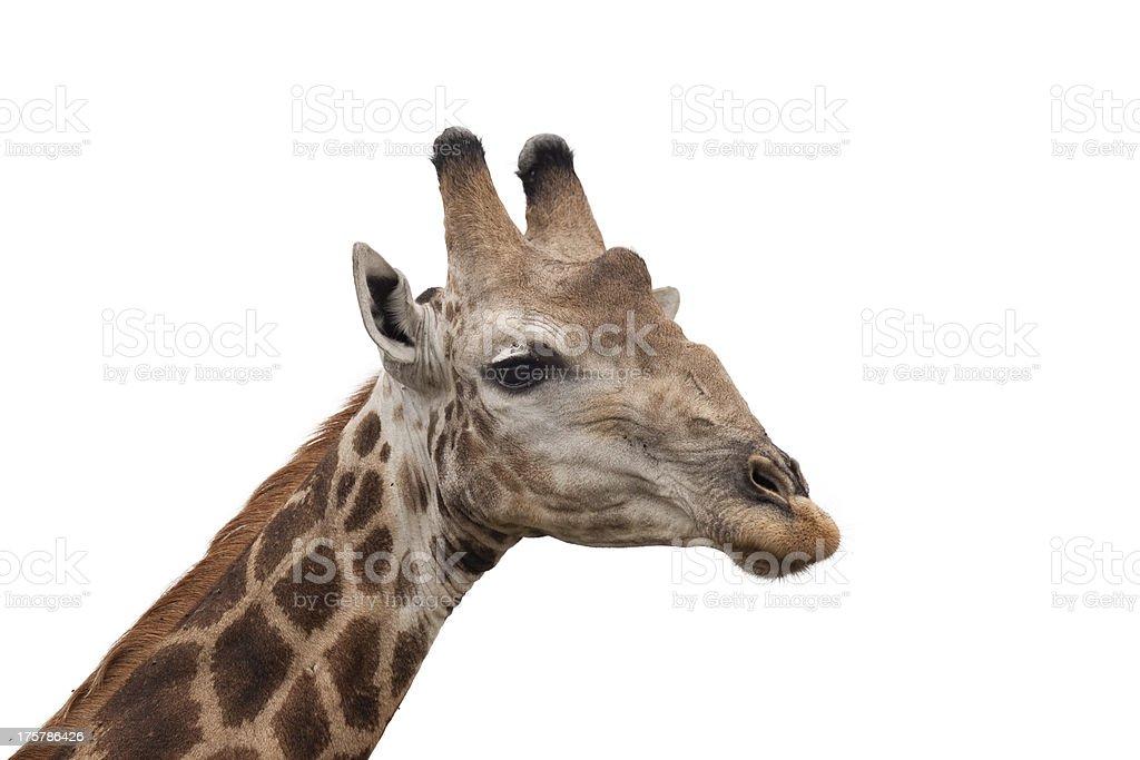 Giraffe Head royalty-free stock photo