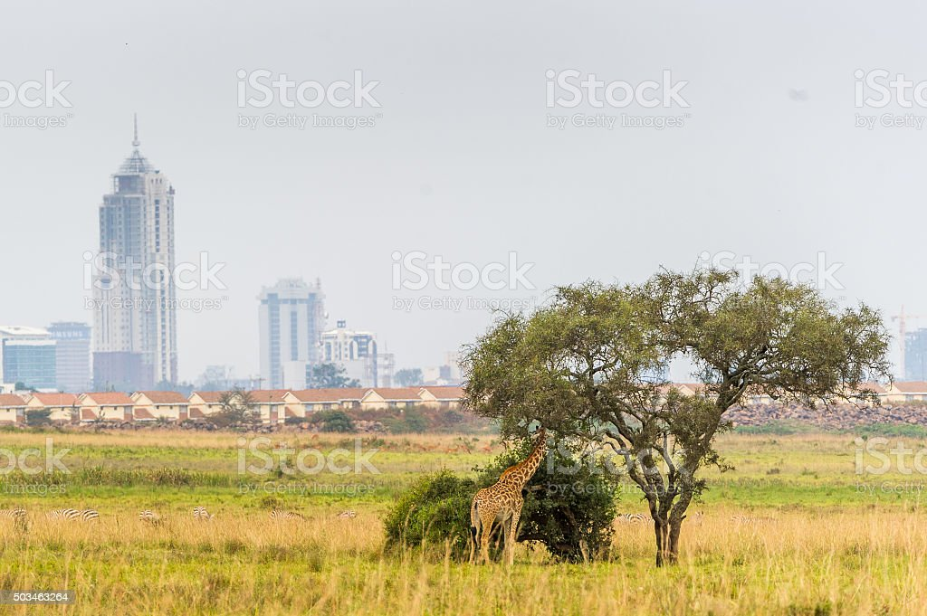 Giraffe vor der Skyline stock photo