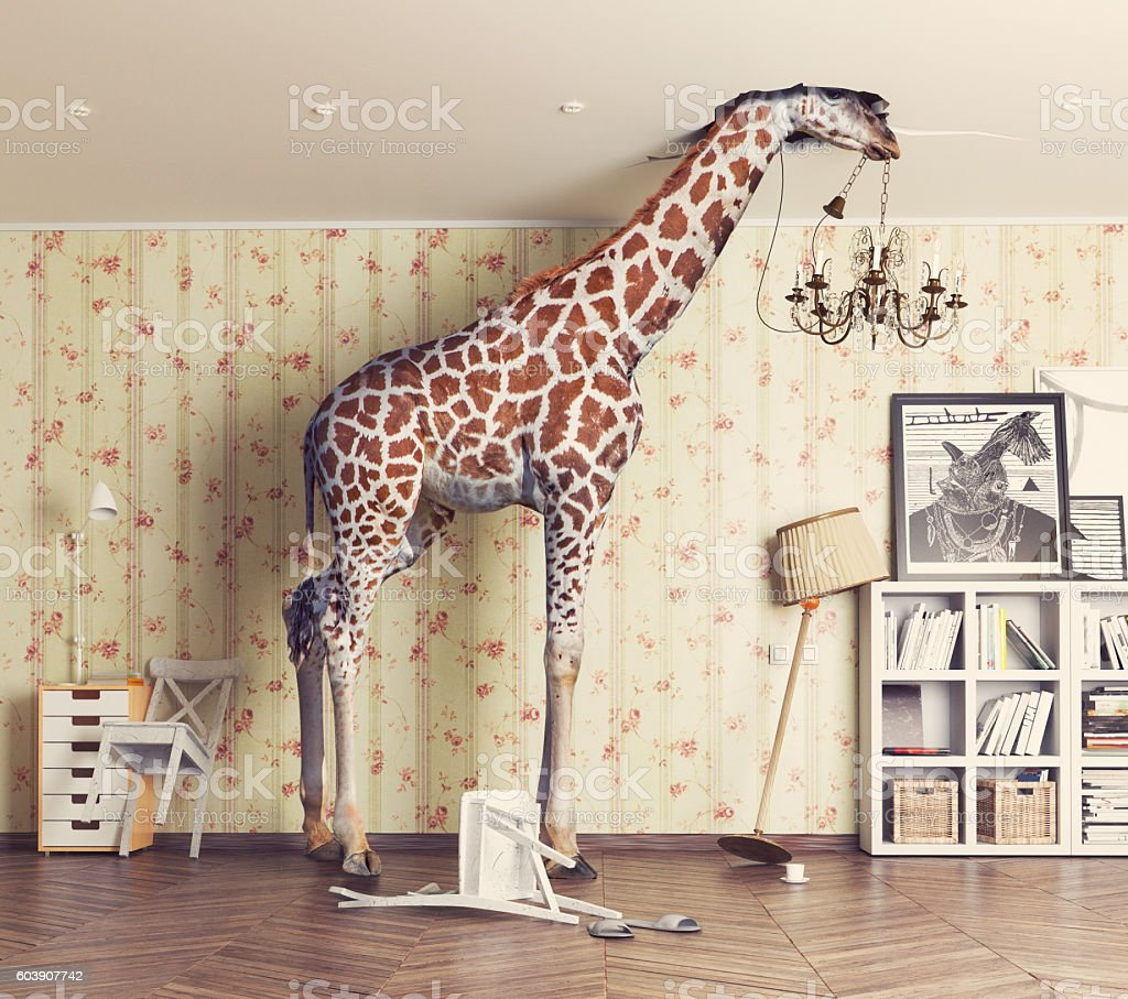 giraffe  in the living room stock photo
