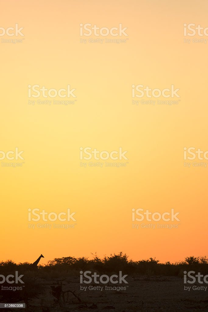 Giraffe in the sunset ( abstract ) stock photo
