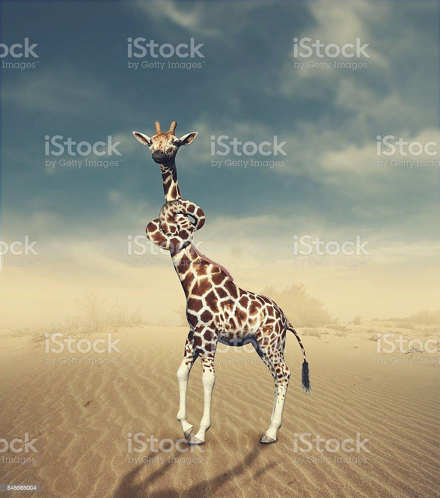 Giraffe neck knotted. stock photo