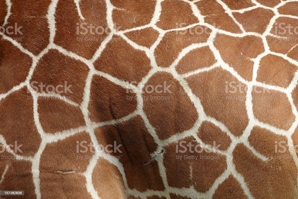 Giraffe pattern stock photo