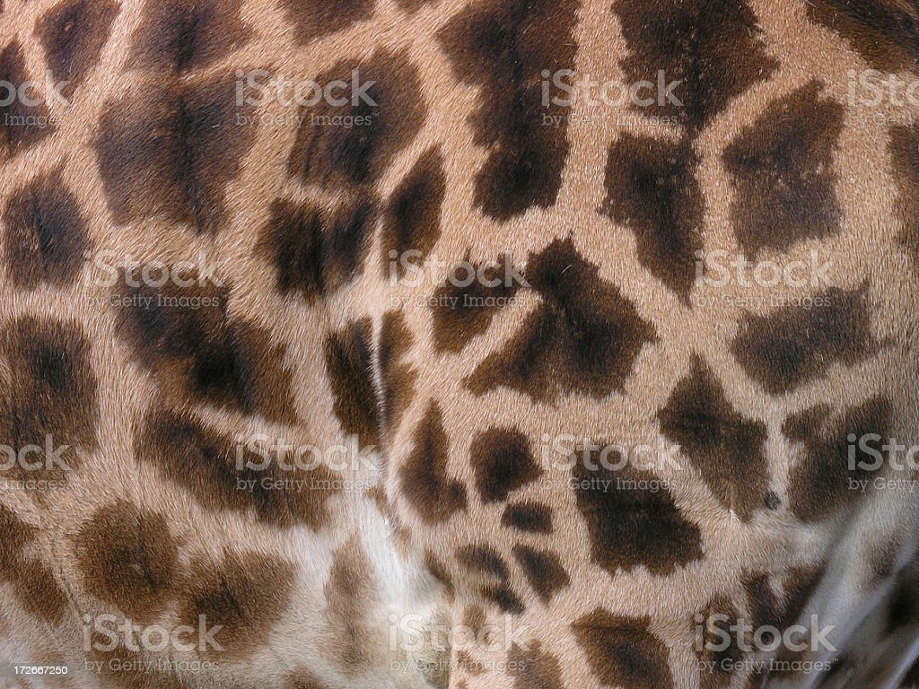 Giraffe skin royalty-free stock photo