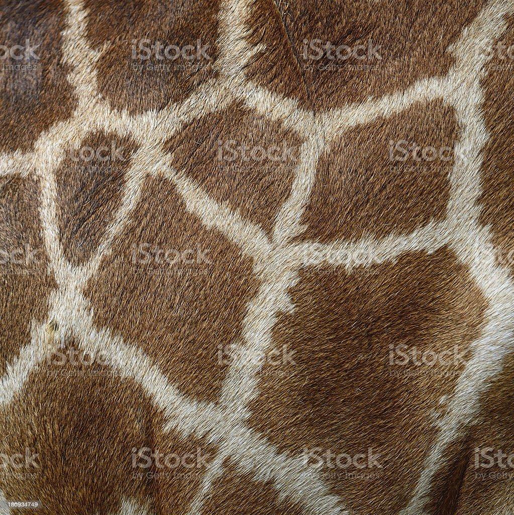 Giraffe skin stock photo