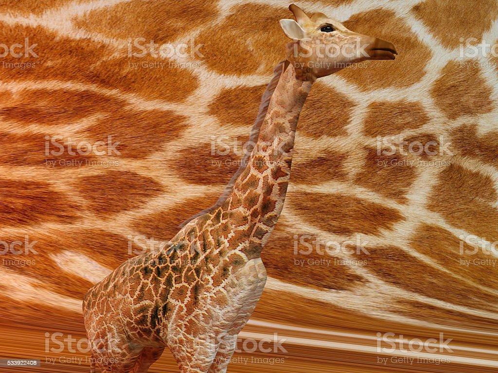 giraffe with pattern texture stock photo