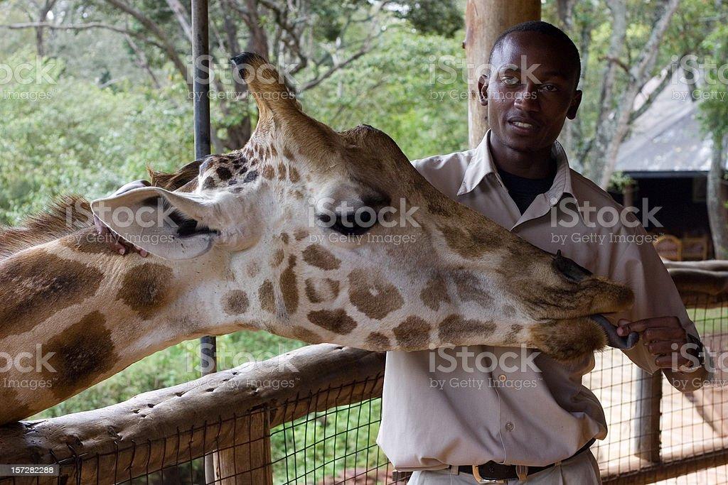 Giraffe with ranger stock photo