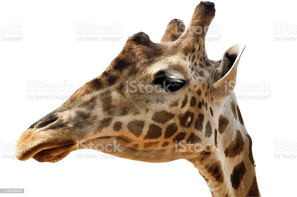 Giraffe's head-isoliert Lizenzfreies stock-foto