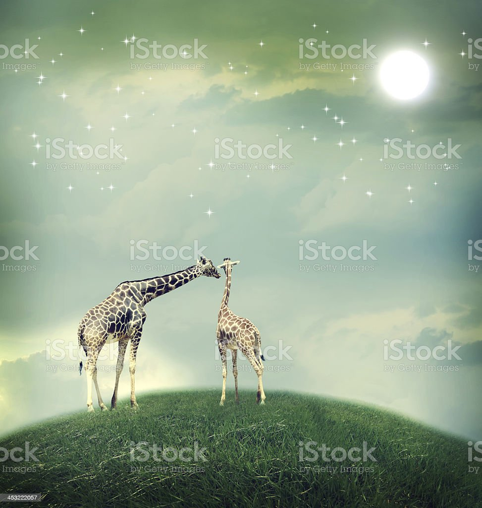 Giraffes in friendship or love concept image royalty-free stock photo