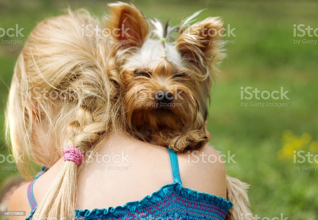 Girl 6 years  with Yorkshire Terrier stock photo