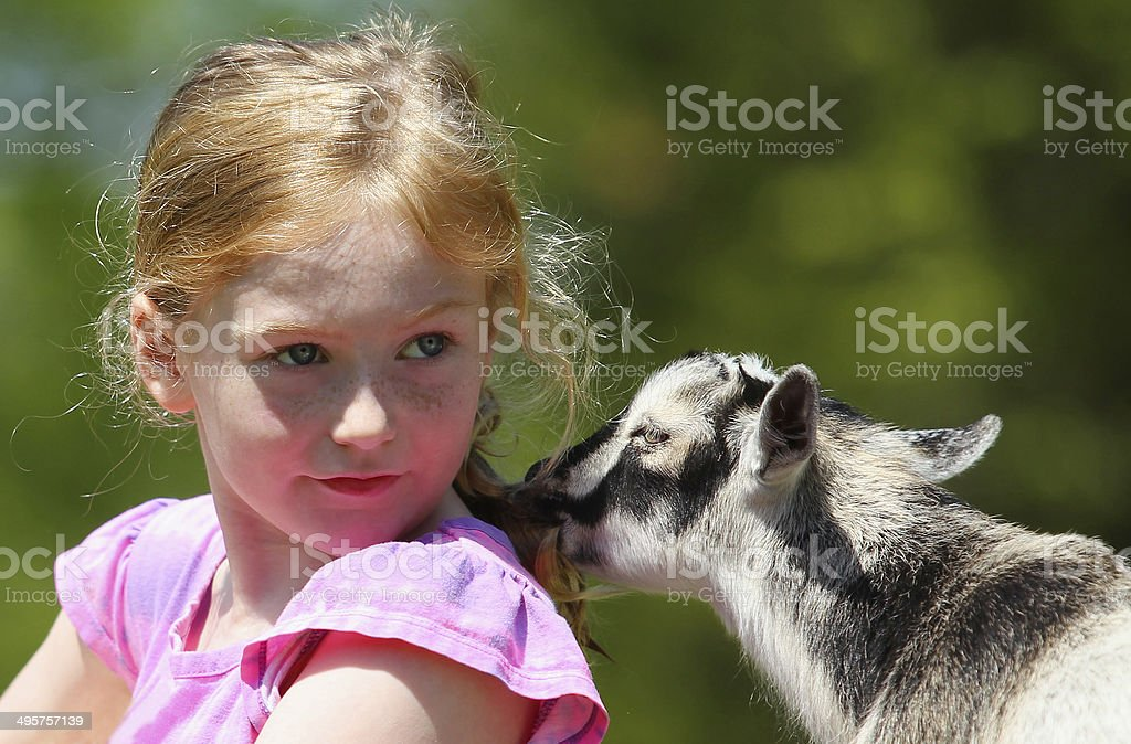 Girl and Baby Goats royalty-free stock photo