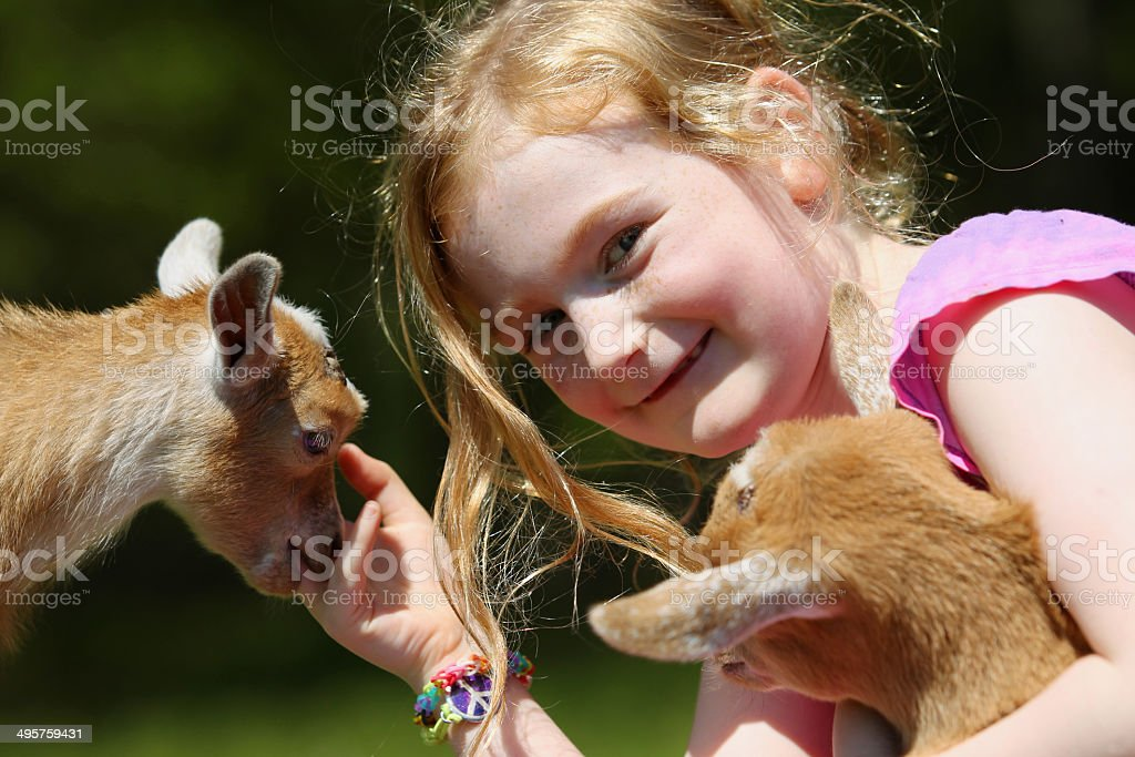Girl and Baby Goats stock photo