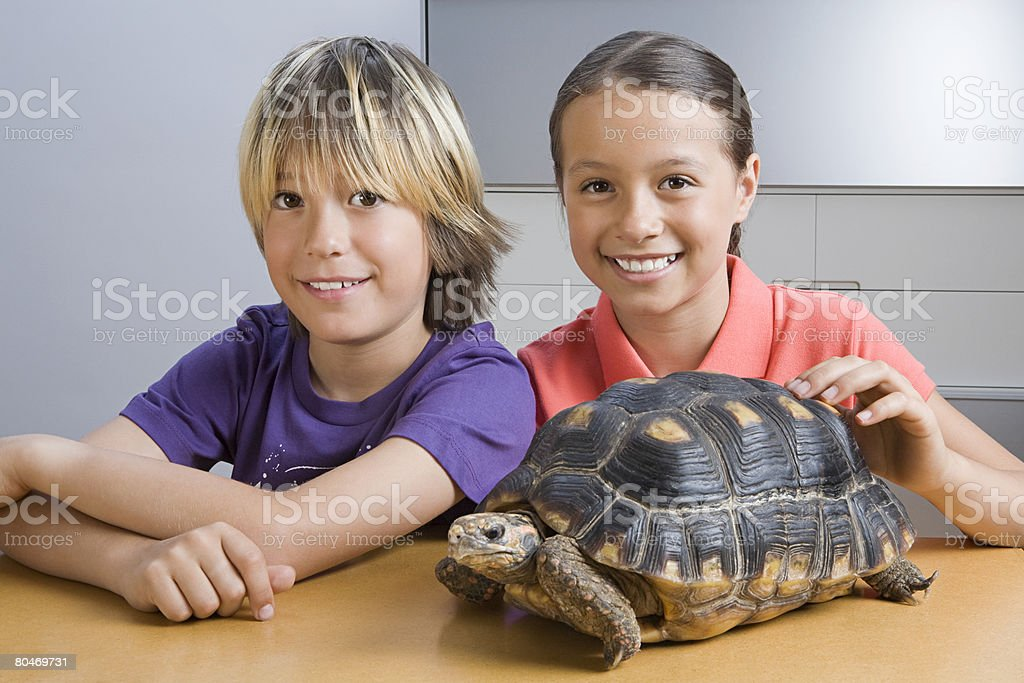 Girl and boy with tortoise stock photo