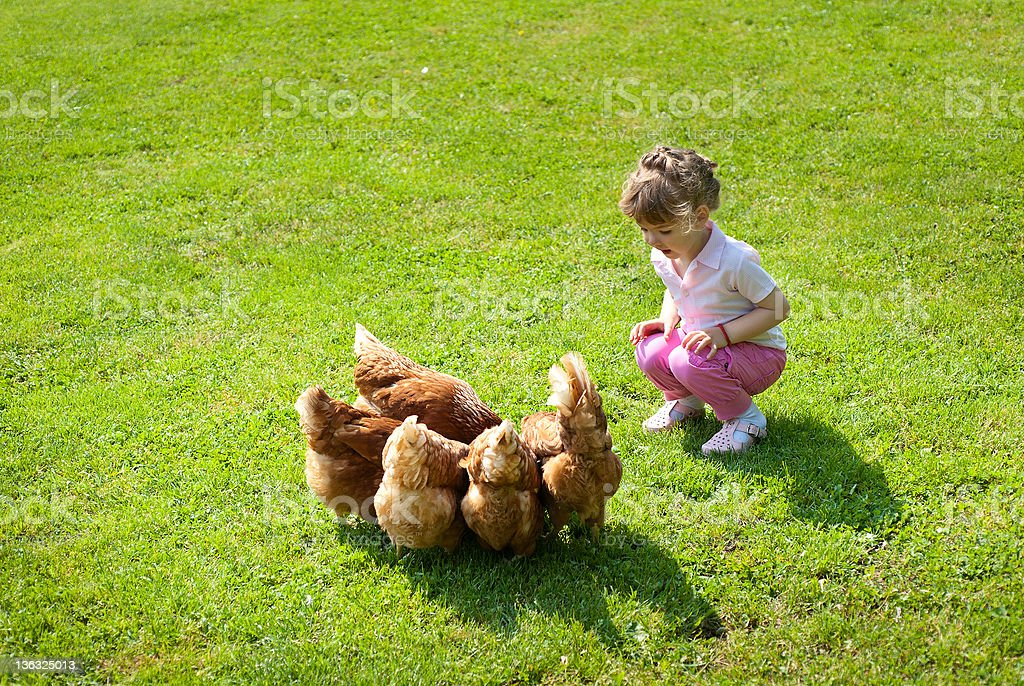 girl and chickens stock photo