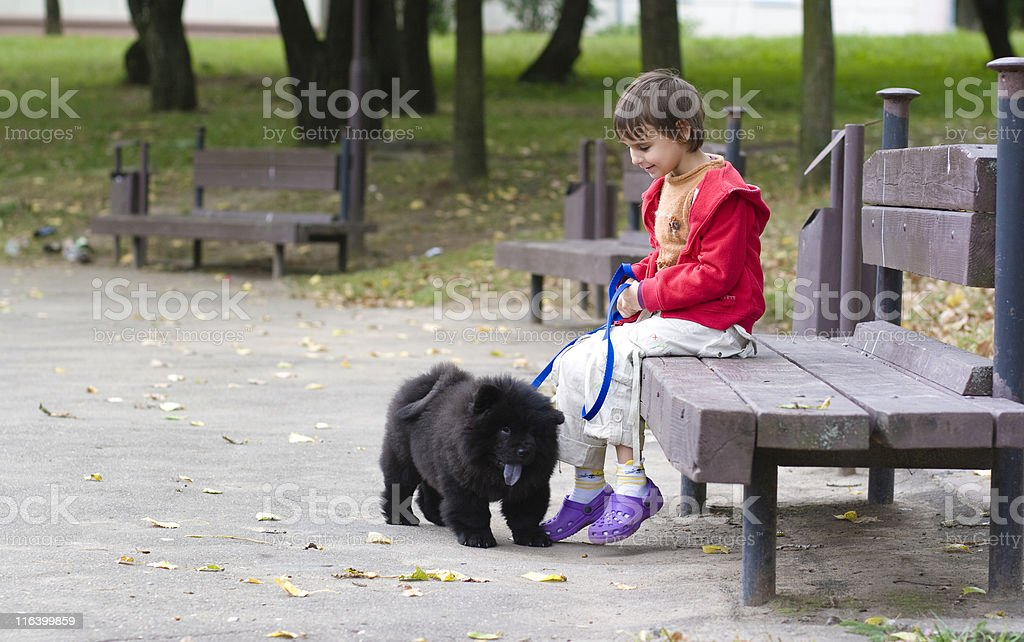 girl and chow-chow stock photo