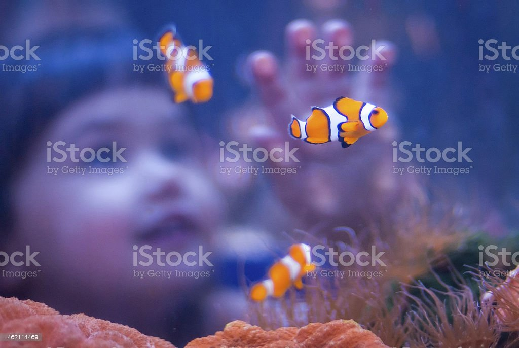 Girl and clown fish at an aquarium stock photo