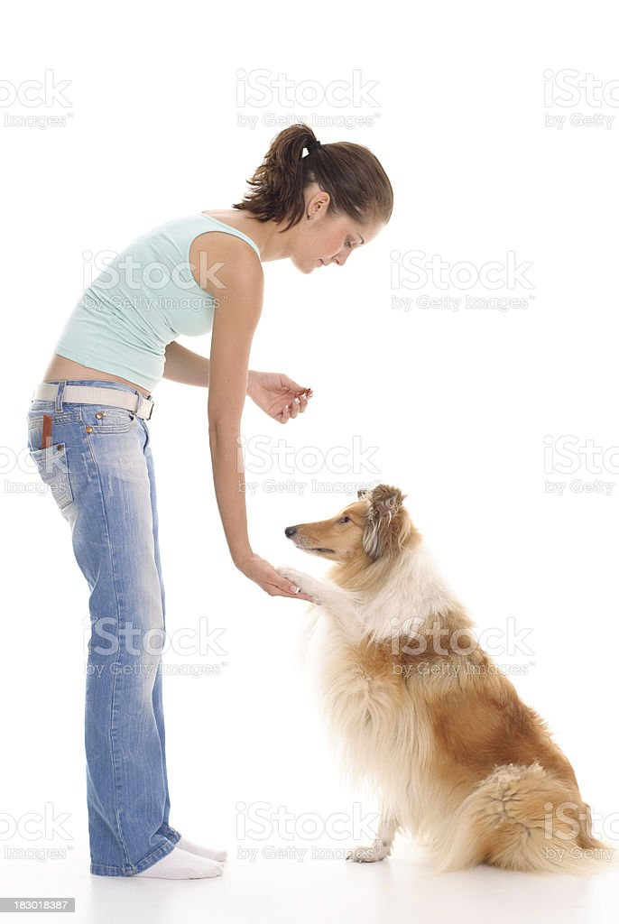 Girl and dog in training stock photo