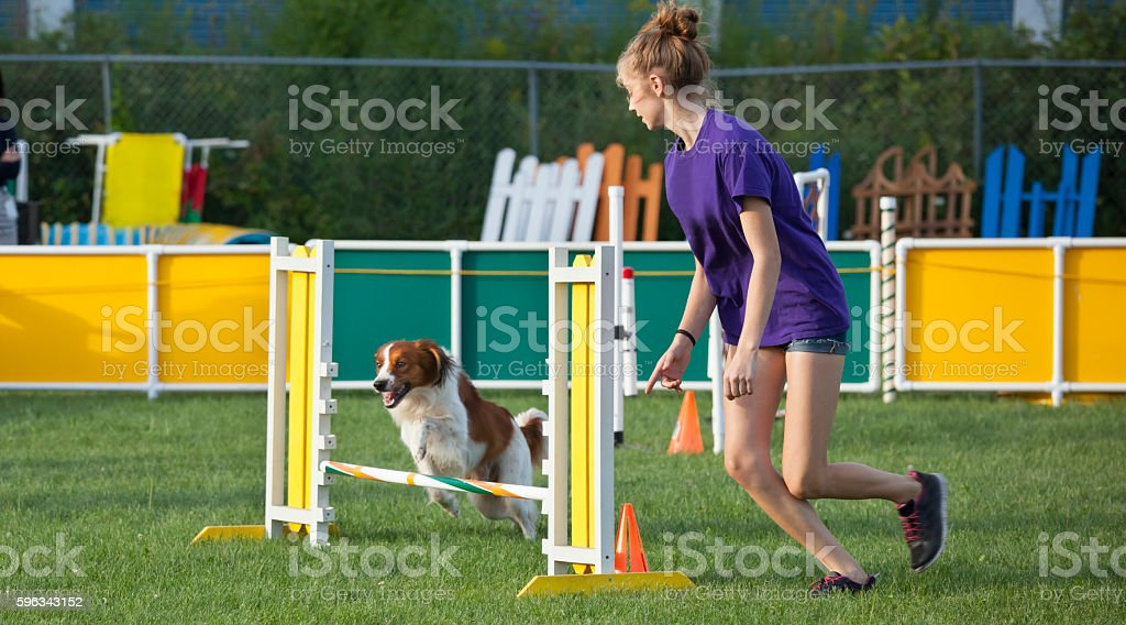 Girl and dog working together in agility competition stock photo