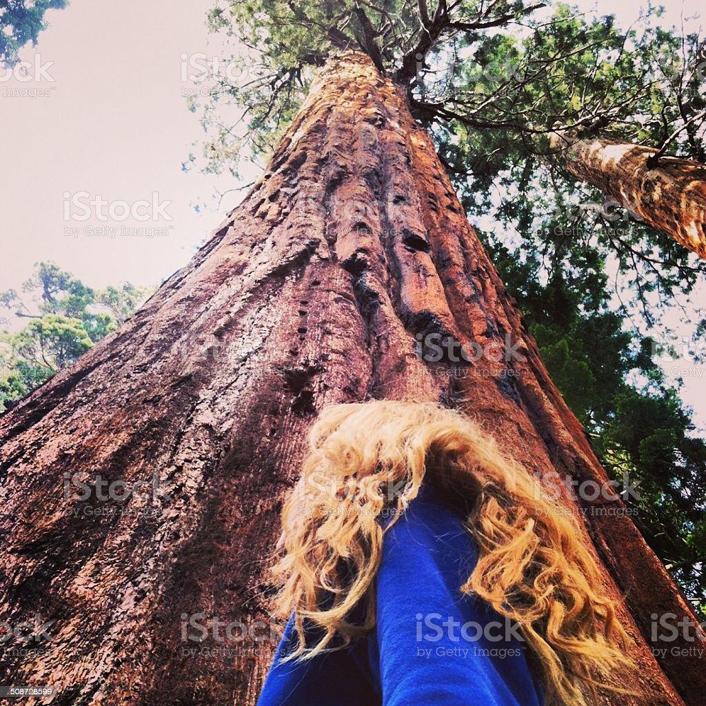 Girl and Giant Redwood Tree stock photo