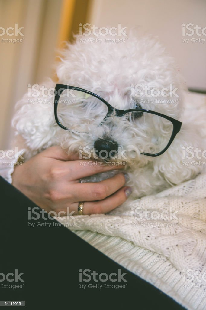 Girl and her dog in the bed stock photo