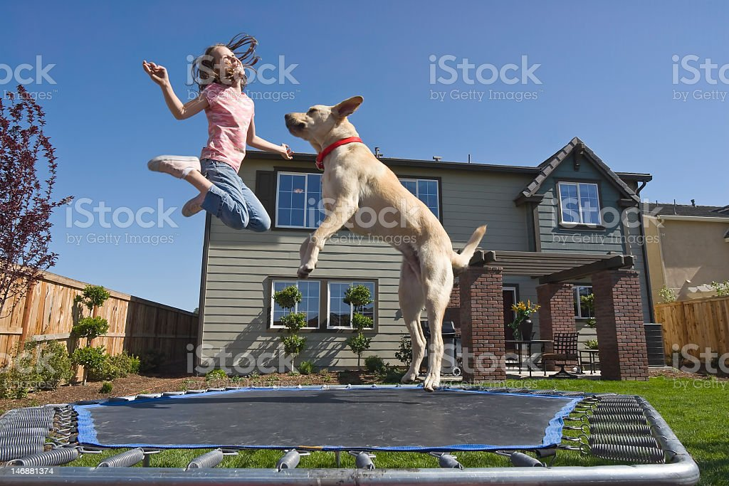 A girl and her dog jumping on a trampoline stock photo